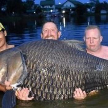 Британец выловил рекордно большую рыбу